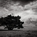 The Tree of Hope by-Zed-Sindelar-CuriousZed-Photography