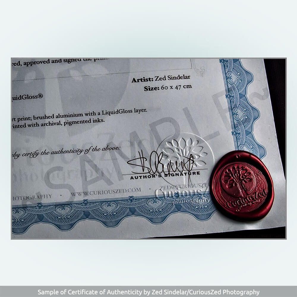 Certificate-of-Authenticity-Zdenek-Sindelar-CuriousZed-sample